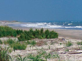 a photo of the beach at Dewees Island, SC